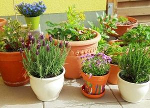 как бороться с мошками на комнатных растениях
