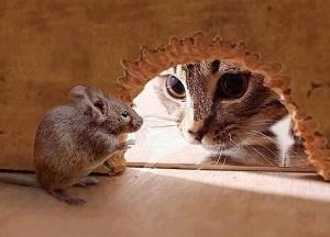 методы борьбы с мышами в доме