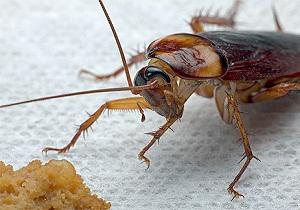 народные средства от тараканов в квартире