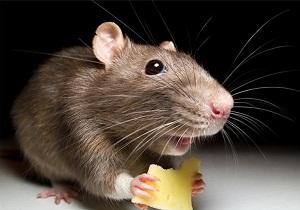 ловушки для мышей своими руками видео