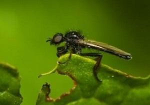 как избавиться от луковой мухи