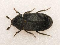 Чем травить тараканов в квартире самостоятельно: препараты и народные средства