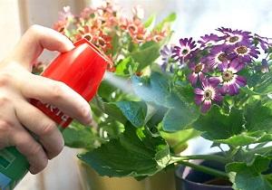 трипсы на комнатных растениях как бороться фото