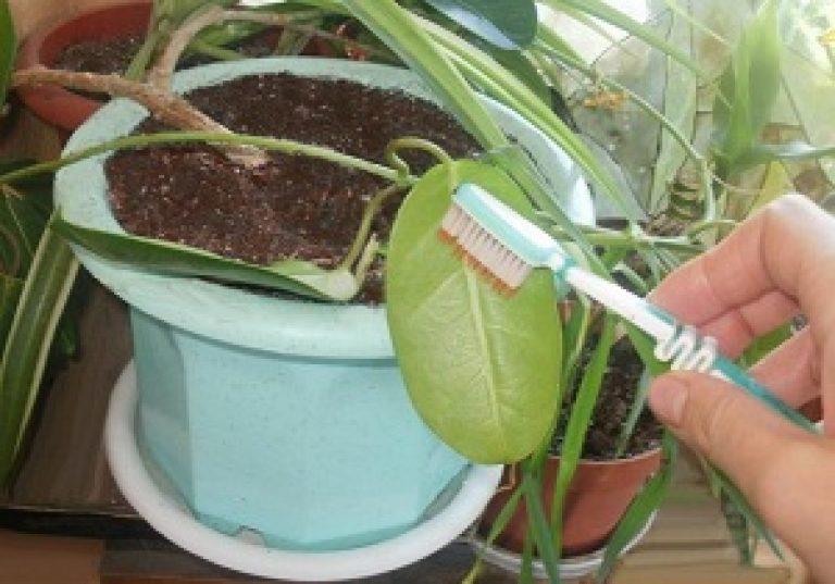 Как бороться с вредителями комнатных растений в домашних условиях