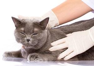 лекарство от глистов для кошек