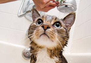 блохи у кошки фото