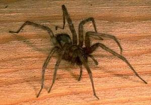 как избавиться от пауков в частном доме