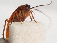 как вывести тараканов