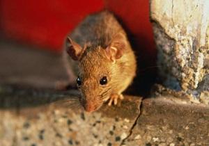 отпугиватель мышей чистый дом отзывы