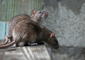 отпугиватель крыс и мышей чистый дом отзывы