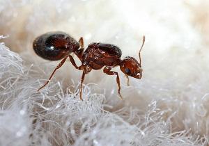 мелкие муравьи в квартире как избавиться