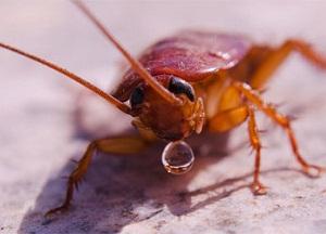 чем вытравить тараканов из квартиры