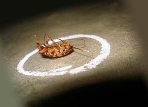 как травить тараканов самостоятельно