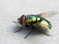 народные средства от мух