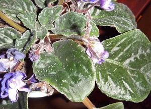 как бороться с тлей на комнатных растениях