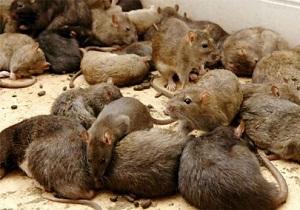средства от мышей на даче