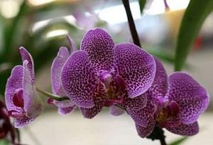 вредители орхидей фото