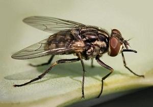 как избавиться от мух дрозофил в квартире