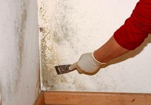 чем обработать стену от плесени и грибка