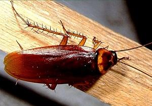 лучшее средство от тараканов в квартире