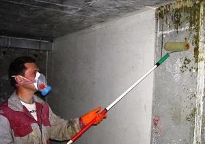чем обработать плесень на стене в квартире