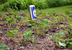 борьба с кротами на садовом участке