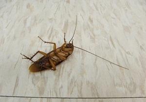 потравить тараканов в квартире цена