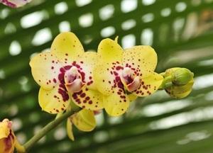 как бороться с вредителями орхидей фаленопсис