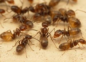 рейтинг средств от муравьев в доме