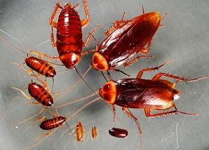способы уничтожения тараканов в доме