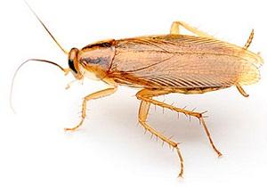 от тараканов ультразвук отзывы