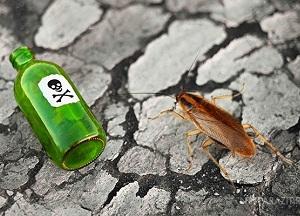 как выбрать действенную отраву от тараканов