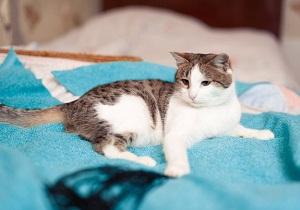 лечение паразитов у кошек