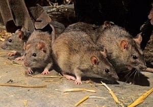 отпугиватель мышей и крыс купить