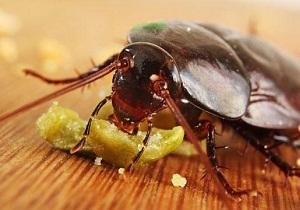 купить отраву для тараканов