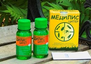сколопендра крымская фото