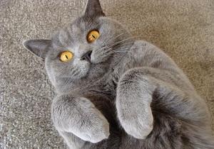 паразиты у кошек симптомы