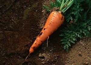 методы борьбы с вредителями моркови