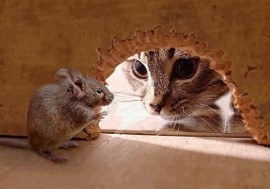 где купить отраву для мышей