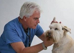 как избавиться от ушного клеща у собак