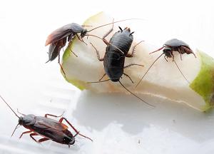 подборка средств от тараканов в квартире