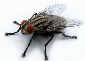 методы борьбы с мухами в квартире