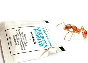 методы применения борной кислоты от муравьев