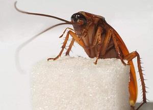 домашние средства от тараканов в квартире