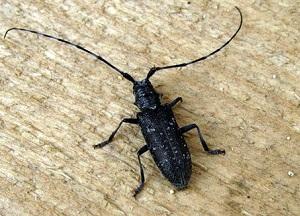 методы борьбы с жуком - короедом