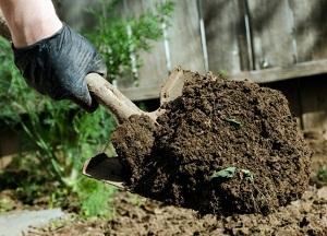обработка садового участка в осенний период от вредителей