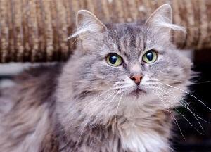 какие паразиты бывают у кошек и как с ними бороться