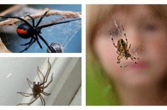 пауки в доме насекомое примета