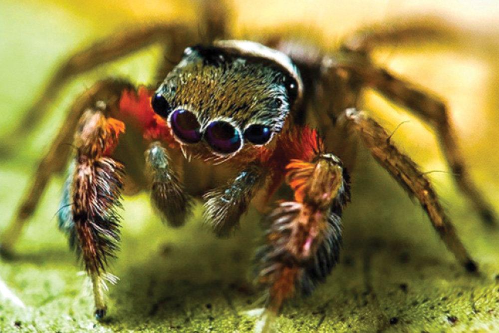 паук картинка