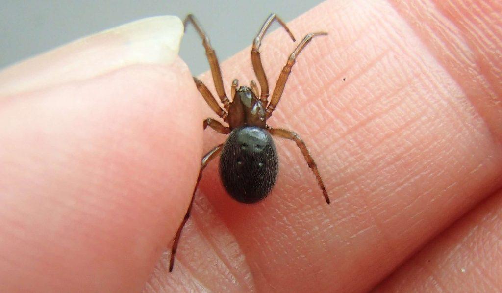 Домашний паук – опасное насекомое в доме или полезный сосед? Пауки в доме это к чему, приметы и факты
